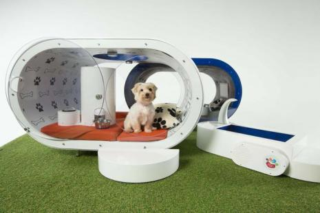Dream Doghouse